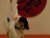 Judo_35